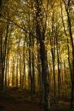 las jesieni zdjęcie royalty free