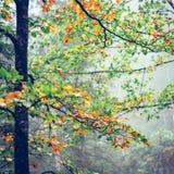 las jesieni mglisty Zdjęcia Royalty Free