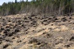 Las jest ciącym puszkiem obraca w suchego nieżywego pole Fotografia Stock
