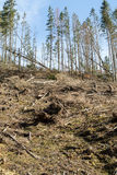 Las jest ciącym puszkiem obraca w suchego nieżywego pole Obrazy Royalty Free