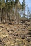 Las jest ciącym puszkiem obraca w suchego nieżywego pole Obraz Royalty Free