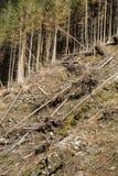 Las jest ciącym puszkiem obraca w suchego nieżywego pole Obrazy Stock