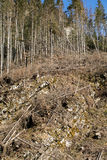 Las jest ciącym puszkiem obraca w suchego nieżywego pole Zdjęcia Stock