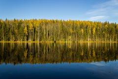 Las, jezioro, niebo Obrazy Stock
