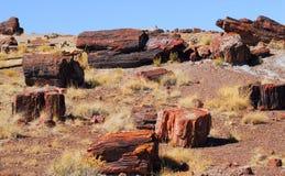 las kamieniejący Zdjęcie Royalty Free