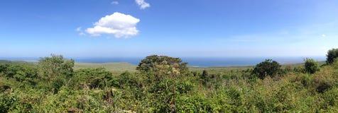 Las krajobrazowa panorama Obraz Stock