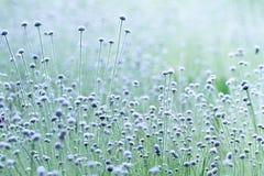 Las kwitnie w ranku Zdjęcie Royalty Free