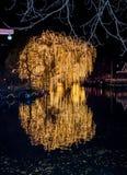 las lámparas amarillas hermosas iluminaron el árbol Imagen de archivo