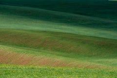 Las líneas de colinas verdes crean modelos hermosos como ondas Iluminado parcialmente por el sol Fondo hermoso imagen de archivo