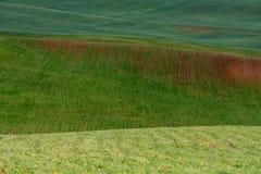 Las líneas de colinas verdes crean modelos hermosos como ondas Iluminado parcialmente por el sol Fondo hermoso fotografía de archivo libre de regalías