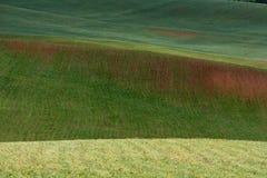 Las líneas de colinas verdes crean modelos hermosos como ondas Iluminado parcialmente por el sol Fondo hermoso foto de archivo