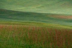 Las líneas de colinas verdes crean modelos hermosos como ondas Iluminado parcialmente por el sol Fondo hermoso foto de archivo libre de regalías