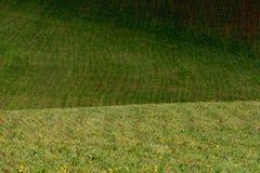 Las líneas de colinas verdes crean modelos hermosos como ondas Iluminado parcialmente por el sol Fondo hermoso imágenes de archivo libres de regalías