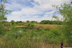 Las Lagunas de Anza Wetlands Image stock