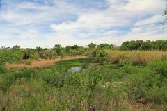 Las Lagunas de Anza Wetlands Photos libres de droits