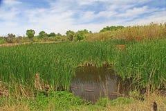 Las Lagunas de Anza Wetlands Photographie stock libre de droits