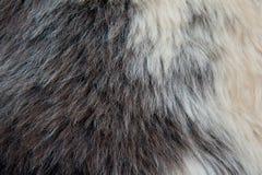 Las lanas suaves blancas y marrones de las ovejas texturizan el fondo fotos de archivo