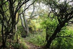 Las, lasów wizerunki Obraz Royalty Free