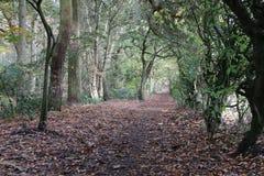 Las, lasów wizerunki Zdjęcia Stock