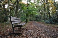 Las, lasów wizerunki Zdjęcie Stock