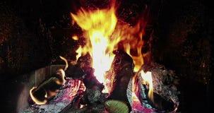 Las llamas del fuego real queman el movimiento con las ramas de la madera, chimenea