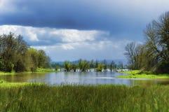 Las lluvias de primavera inundan los humedales ya saturados en Sauvie Isl Foto de archivo libre de regalías