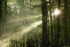 Las luces de un sol Fotografía de archivo libre de regalías