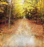 Las maderas del otoño se arrastran en el fondo de Grunge Fotos de archivo libres de regalías