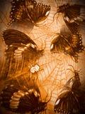 las majestatyczny Zdjęcia Royalty Free
