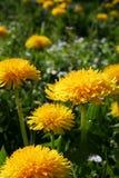 Las malas malas hierbas crecen hermosas Imagen de archivo
