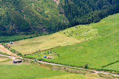 Las manadas de vacas pastan en un campo de hierba al lado de un camino rural y de un granero fotografía de archivo libre de regalías