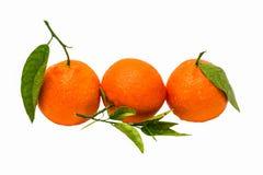 Las mandarinas mojadas del árbol del color anaranjado con verde salen en fila de mí Fotos de archivo