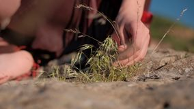 Las manos de la muchacha que rasgan la hierba del campo metrajes