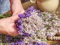 Las manos de la mujer del jardinero crean el ramo herbario del olor relajante fotos de archivo
