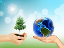 Las manos de la mujer que sostienen el árbol y la tierra foto de archivo libre de regalías