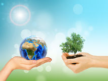 Las manos de la mujer que sostienen el árbol y la tierra verdes fotos de archivo libres de regalías