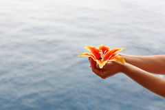 Las manos de la mujer sostienen el lirio en el fondo del agua Fotos de archivo libres de regalías