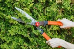 Las manos de la mujer utilizan la herramienta que cultiva un huerto para arreglar arbustos Imagenes de archivo