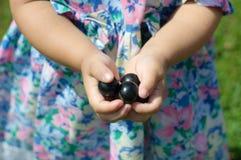 Las manos de la niña con las bayas de la pasa aumentaron en el uno mismo orgánico pi Foto de archivo