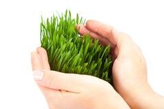Las manos de las mujeres protegen la hierba verde Imagen de archivo libre de regalías