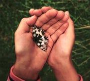 Las manos de los niños que sostienen una mariposa en el aire abierto Imagen de archivo libre de regalías