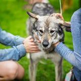 Las manos de muchachas lamentan y el perro de la caricia del refugio con triste entiende ojos Esperanzas del perro de tener el du Imagen de archivo libre de regalías