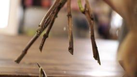 Las manos de las mujeres cortaron los extremos de las ramas con las tijeras Salpica del agua almacen de metraje de vídeo