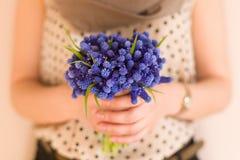 Las manos de una mujer joven que lleva a cabo un manojo de azul hermoso de la primavera florecen Imágenes de archivo libres de regalías