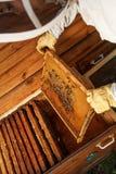 Las manos del apicultor sacan de la colmena un marco de madera con el panal Recoja la miel Concepto de la apicultura fotos de archivo