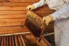 Las manos del apicultor sacan de la colmena un marco de madera con el panal Recoja la miel Concepto de la apicultura imagen de archivo
