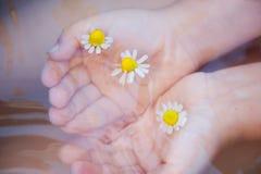 Las manos del bebé con la manzanilla florecen en la superficie del agua Foto de archivo libre de regalías