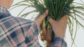 Las manos del granjero con los bulbos frescos de la cebolla en el sol Productos frescos de una pequeña granja almacen de metraje de vídeo