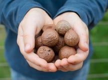 Las manos del niño que sostienen nueces de macadamia Imagenes de archivo