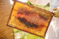 Las manos del primer del apicultor llevan a cabo el marco de madera con el panal Recoja la miel Concepto de la apicultura foto de archivo libre de regalías